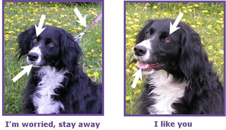 Relaxed dog body language